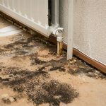 mold removal panama city, mold panama city, mold remediation panama city