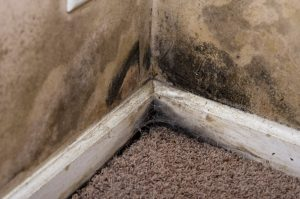 mold removal bay county, mold cleanup bay county