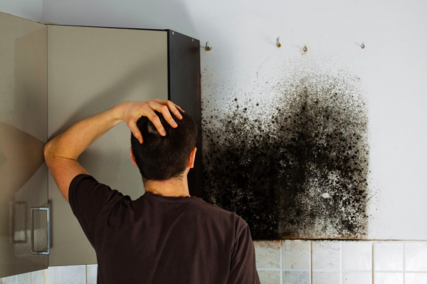 mold removal panama city,