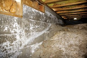 mold removal panama city, mold cleanup panama city, mold remediation panama city
