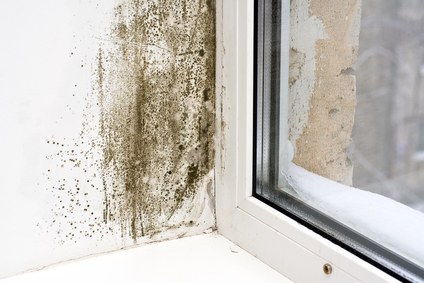 mold removal panama city, mold remediation panama cityv