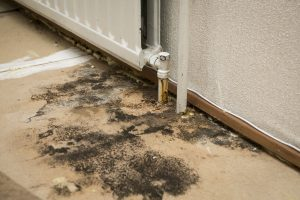 mold removal panama city, mold remediation panama city, mold damage panama city